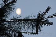 Paul SEQUENCE Ferguson             sequence dot net - Moon In The SKY 1