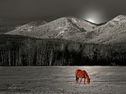 Vicki Lea Eggen - Moon of the wild Horse