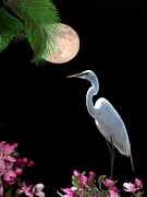 Great Egret Posters - Moon over Florida Poster by Betty LaRue