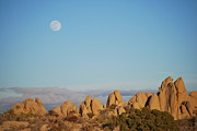 Cast Shadow Posters - Moon Over Joshua Tree Poster by Kenna Hillman