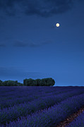 Provence Photos - Moon over Lavender by Brian Jannsen