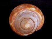 Mary Deal - Moon Shell