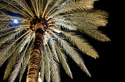 Single Tree Framed Prints - Moon Through Palm Tree Framed Print by Photo by Stuart Gleave