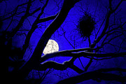 Richard Piper Metal Prints - Moon Wood  Metal Print by Richard Piper