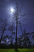 Bare Trees Posters - Moonlight Amongst A Starry Sky Poster by Miguel Claro