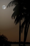 Diane Merkle Posters - Moonlight and Palms Poster by Diane Merkle