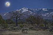 Grazing Horse Posters - Moonlight horse Poster by Jim Wright