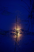 Gregory Schultz - Moonlight on the Water