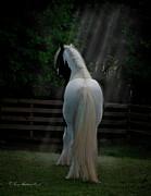 Terry Kirkland Cook - Moonlight Stallion
