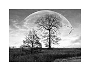 Geese And Moon Prints - Moonlit Silhouette Print by Brian Wallace