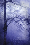 Morning Mist Images Framed Prints - Moonlit Tree Framed Print by Judi Bagwell
