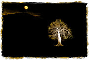 Moonlit Night Prints - Moonlit Tree Print by Mal Bray