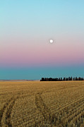 Prairie Photography Prints - Moonrise Print by Images by Christine De Bruyn Photography