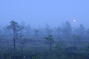 Bog Framed Prints - Moonrise Over Foggy Bog, Estonia, Europe Framed Print by Sven Zacek