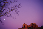 Purple Tree Framed Prints - Moonrise Over Oak Creek Canyon Framed Print by Stockbyte