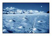 Snow Prints Photos - Moonwalk by Mal Bray