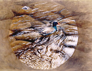 Waterfowl Paintings - Moorhen Creek Tondo by Michael Oberhofer
