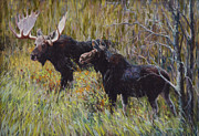 Bull Moose Posters - Moose at Willow Flats Poster by Mary Ann Cherry
