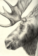 Rack Drawings Prints - Moose Print by Aurora Jenson
