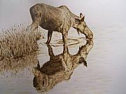 Wolf Pyrography - Moose cow taking a drink by Adam Owen