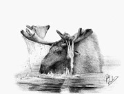 Pencil Prints - Moose Drawing Print by Josh Rowland