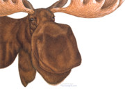 Huge Digital Art Prints - Moose Head Print by Francesco Santalucia Art