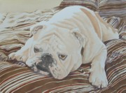 Frances Evans - Moose the British Bulldog