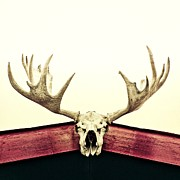 Skull Photos - Moose Trophy by Priska Wettstein