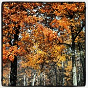 Bestoftheday Acrylic Prints - More #fall #colors Acrylic Print by Adam Romanowicz