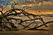 Driftwood Framed Prints - More Wood Framed Print by Joetta West