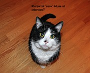 Funny Cats Posters - More Words From  Teddy the Ninja Cat Poster by Reb Frost