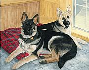German Shepards Framed Prints - Morgan and Brie Framed Print by Gail Finger