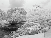 Infrared Originals - Morikami Japanese Gardens by Rolf Bertram