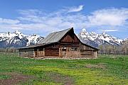 Firm Framed Prints - Mormon Barn Tetons Framed Print by Douglas Barnett