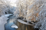 White River Scene Prints - Morning after Snowfall Print by Thomas R Fletcher