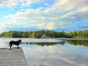 Black Lab Mixed Media - Morning at Pine Lake by Bruce Ritchie