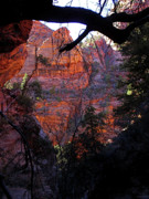 Tree Art Photos - Morning at Zion National Park by Rona Black