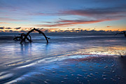Tree Roots Photo Prints - Morning Calm at Driftwood Beach Print by Debra and Dave Vanderlaan