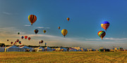 Balloon Fest Framed Prints - Morning Colors Framed Print by David Hahn