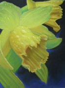 Dew Pastels Posters - Morning Daffodil Poster by Joan Swanson
