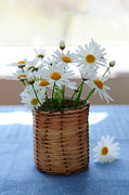 """indoor"" Still Life  Framed Prints - Morning daisies Framed Print by Elena Elisseeva"
