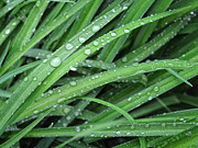 Dew Drop Prints - Morning Dew Drop Print by Brian Mollenkopf
