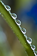 Grass Reflection Framed Prints - Morning dew drops 2 Framed Print by Heiko Koehrer-Wagner