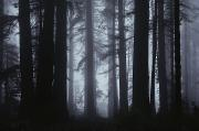 Woodland Scenes Prints - Morning Fog Envelops Giant Redwood Print by James P. Blair