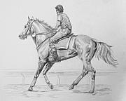Thoroughbred Drawings - Morning Gallop by Donna Teleis