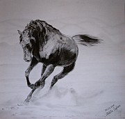Wild Horses Drawings - Morning game 2 by Melita Safran