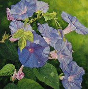 Vicki Greene - Morning Glories