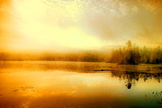 Adirondacks Prints - Morning Gold Print by Emily Stauring