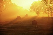 Missouri Photos - Morning Gold Sunlight by Heather Black