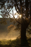 Early Morning Sun Photos - Morning Has Broken by Karol  Livote